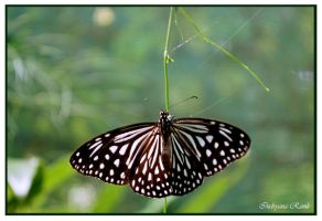 butterfly park 3 by indryana