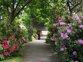flowered path by ditney