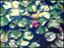 Lily Pads by BulletsxButterflies