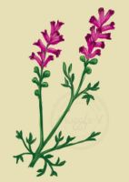 Fumitory by ProfBell