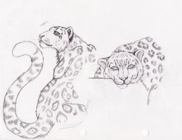 snow leopards by thais-norris