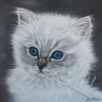 Kitten Monty by LouiseMarieFineArt