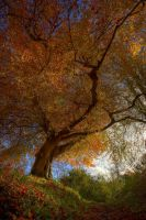 Belvoir Tree from Below by Gerard1972