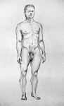 proportions by SuspiciousHat