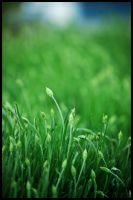 Grass by igelkotten