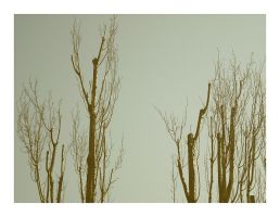 Shadows And Tall Trees by erlebnis