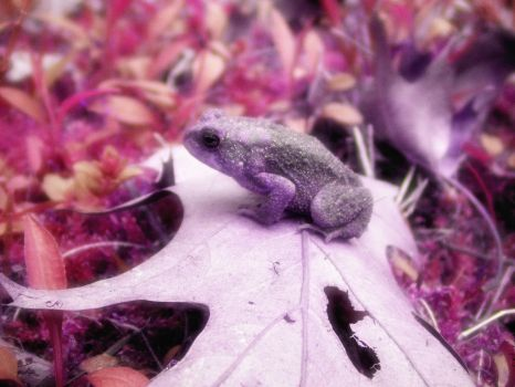 .:purple toad:. by Token-One