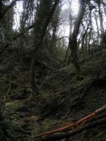 another forest landscape 2 by Cippman