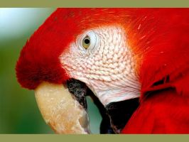 Wallpaper - macaw by emailandthings