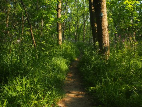 Forest Path 5 by AllStock