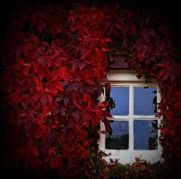 red around a window by awjay