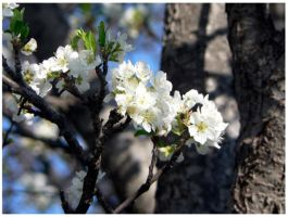 Plum Tree 2 by soulless666