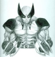 Wolverine by ArtisticSweetie