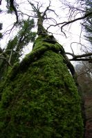 Moss on tree by doulifee