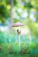 Slug on a Mushroom by drewb-photography
