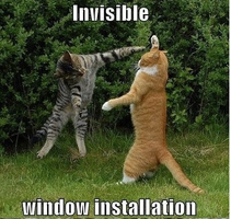 Invisible Window Installation by AmberTheAlchemist