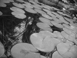 Lonely Lilly Pads by metalchick200615