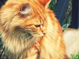 Red Cat by Etelie