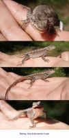 hand Lizard- STOCK by Rainny-Stock