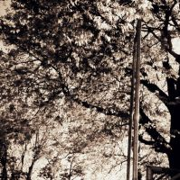 Pole and Trees. by RainbowGuitars