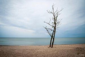 Lonely Tree by Dinozzaver