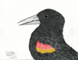 Redwing Blackbird by Aryncoryn