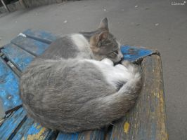 Bus Stop Cat (1) by 0Lizuza0