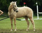 Eventing Horse Show Stock 11 by almondjoyy5