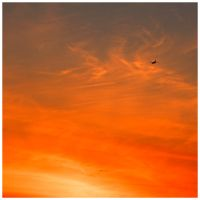 Sunset Flight by Val-Faustino