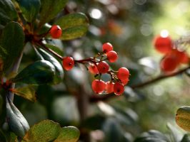 Red Berries by gee231205