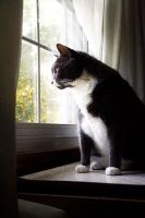 Cat looking out window by ProneSniper