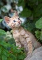 chaton by icedheartgd