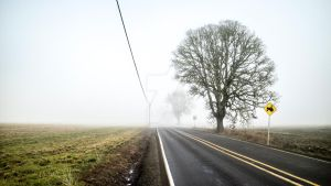 Foggy Country Trip by Walden-Photography