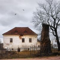 House with stump by xrust