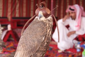 Falcon by Saher0001