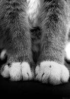 Paws by ExtraoridnaryGirl