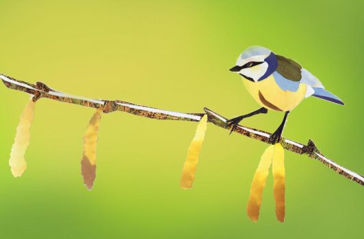 blue tit on catkins by cerimair