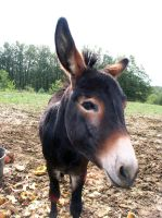 Donkey Head 1296880 by StockProject1