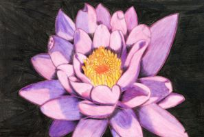 Lotus flower -drawing by midniteoil