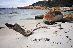Driftwood by argopete