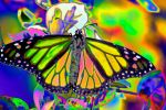 Psychedelic Monarch by OrphieG