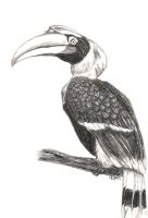 Hornbill Charcoal by JenDragon