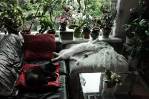 Caterday Afternoon by Son-of-Incogneato