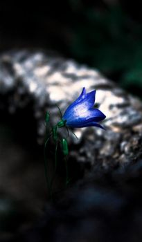 Lonely Blue Bell by sophaclistic