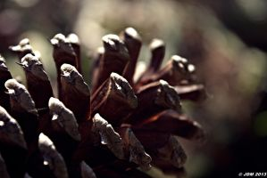 Autumn Pine Cone by JDM4CHRIST