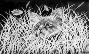 Cat 2 by imcy