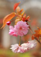 Blossoming by Nietra