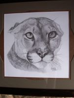 Cougar by LindseyTaylor