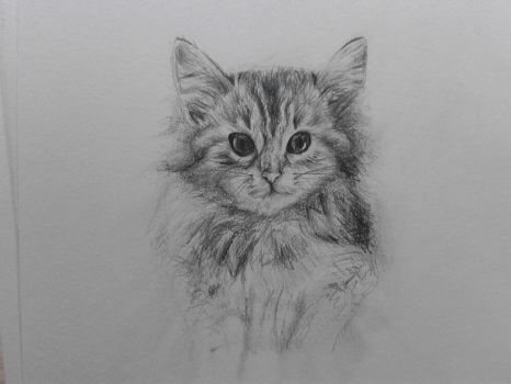 cat by lauraaliceb