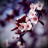 spring is here3 by Powerpiill